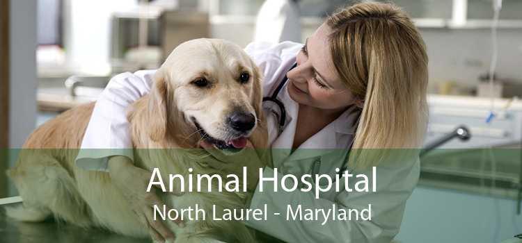 Animal Hospital North Laurel - Maryland