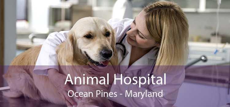 Animal Hospital Ocean Pines - Maryland