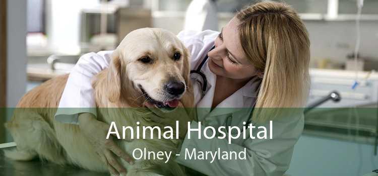 Animal Hospital Olney - Maryland