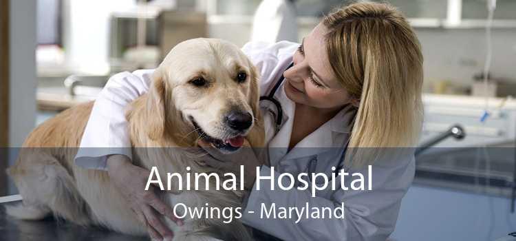 Animal Hospital Owings - Maryland