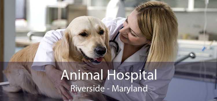 Animal Hospital Riverside - Maryland