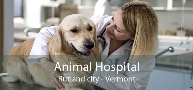 Animal Hospital Rutland city - Vermont