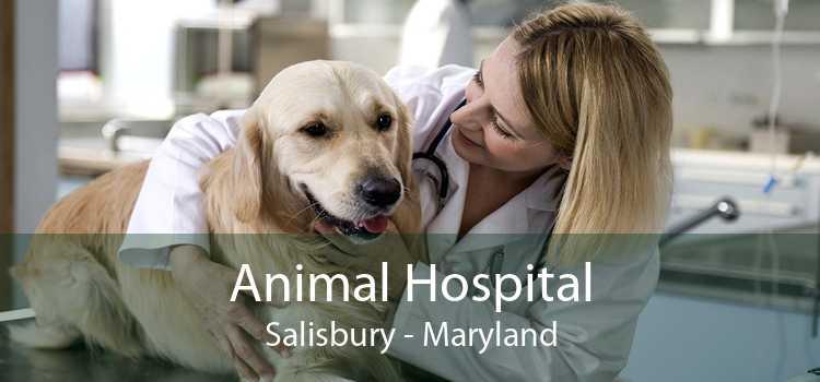 Animal Hospital Salisbury - Maryland