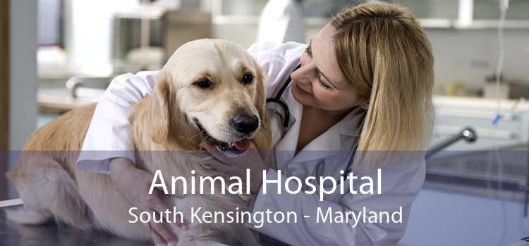 Animal Hospital South Kensington - Maryland
