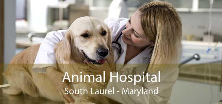 Animal Hospital South Laurel - Maryland