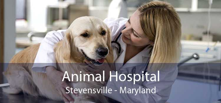 Animal Hospital Stevensville - Maryland