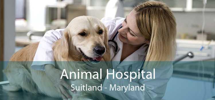 Animal Hospital Suitland - Maryland