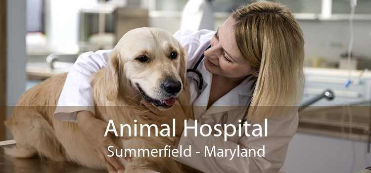 Animal Hospital Summerfield - Maryland