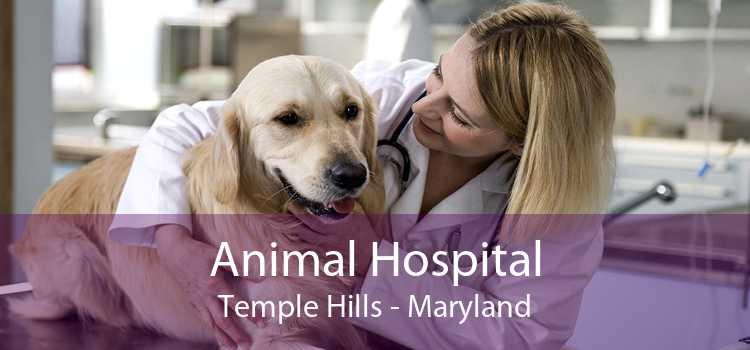 Animal Hospital Temple Hills - Maryland