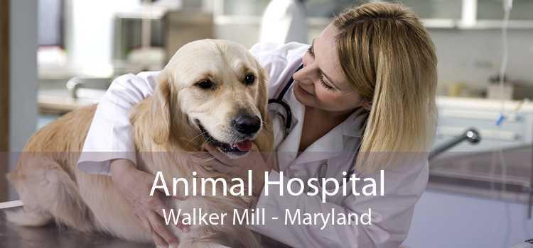 Animal Hospital Walker Mill - Maryland