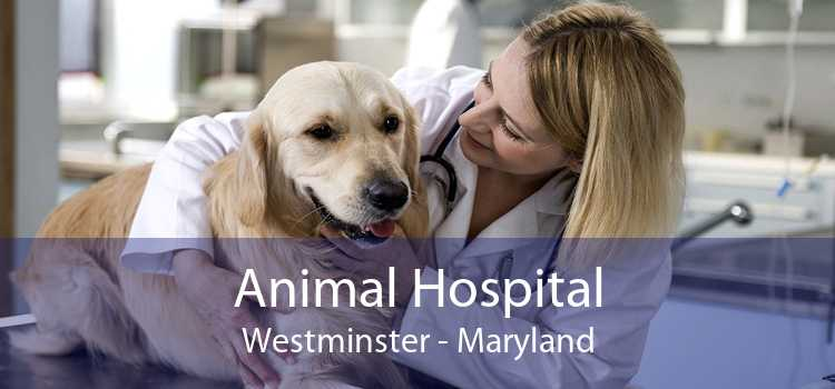 Animal Hospital Westminster - Maryland