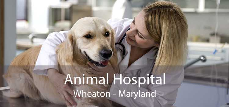 Animal Hospital Wheaton - Maryland