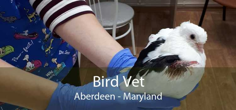 Bird Vet Aberdeen - Maryland