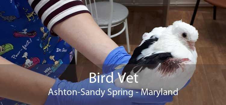Bird Vet Ashton-Sandy Spring - Maryland