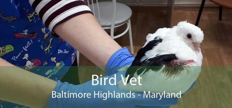 Bird Vet Baltimore Highlands - Maryland