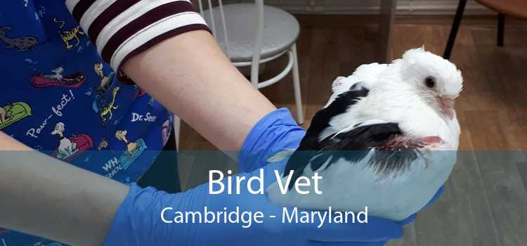 Bird Vet Cambridge - Maryland