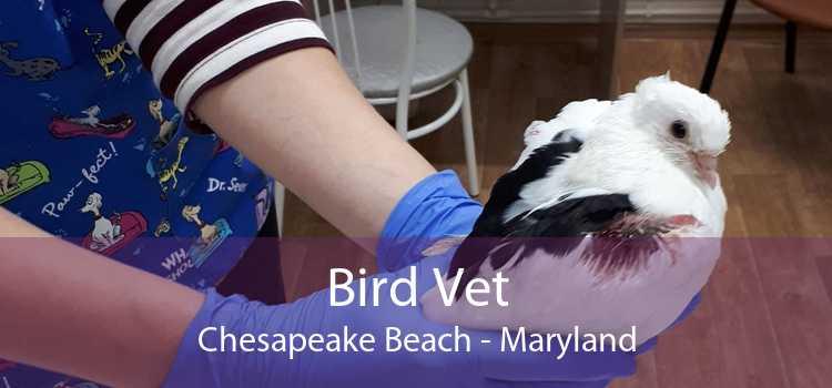 Bird Vet Chesapeake Beach - Maryland