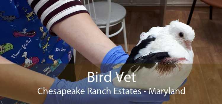 Bird Vet Chesapeake Ranch Estates - Maryland