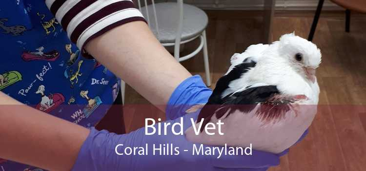 Bird Vet Coral Hills - Maryland