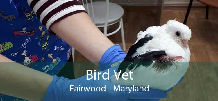 Bird Vet Fairwood - Maryland