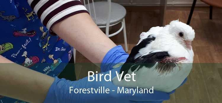 Bird Vet Forestville - Maryland