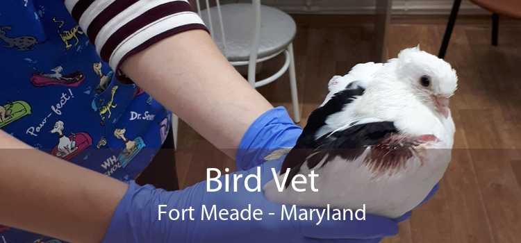 Bird Vet Fort Meade - Maryland
