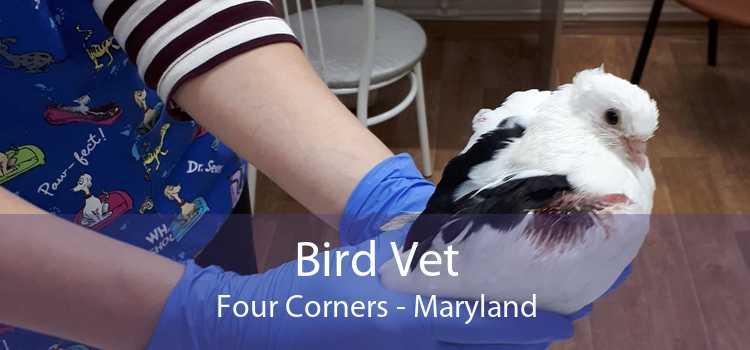 Bird Vet Four Corners - Maryland