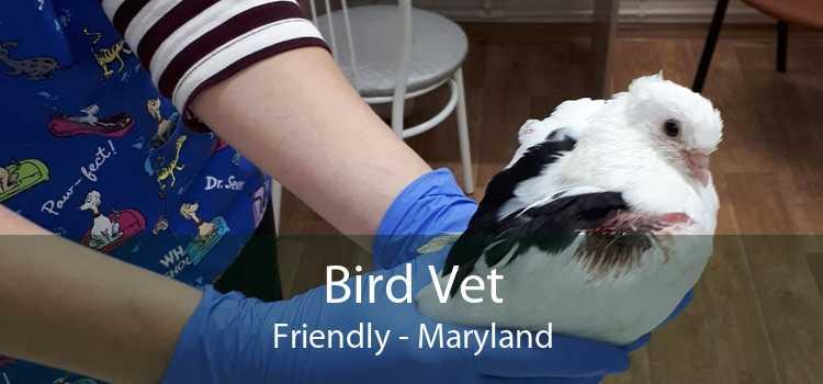 Bird Vet Friendly - Maryland