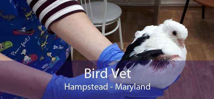 Bird Vet Hampstead - Maryland