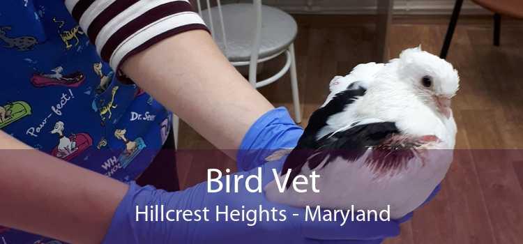Bird Vet Hillcrest Heights - Maryland