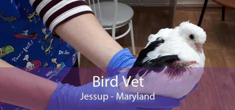 Bird Vet Jessup - Maryland