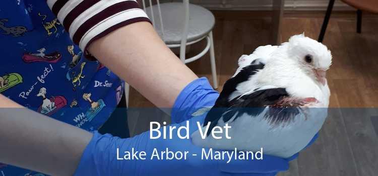 Bird Vet Lake Arbor - Maryland
