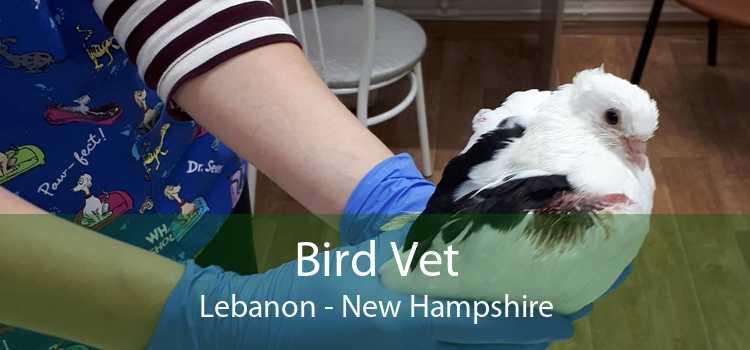 Bird Vet Lebanon - New Hampshire
