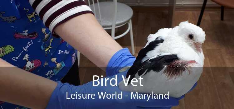 Bird Vet Leisure World - Maryland