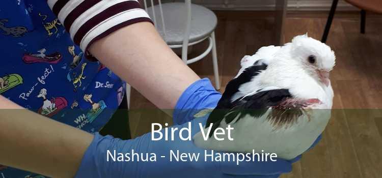 Bird Vet Nashua - New Hampshire