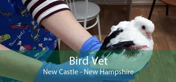 Bird Vet New Castle - New Hampshire