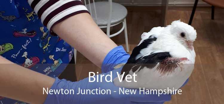 Bird Vet Newton Junction - New Hampshire