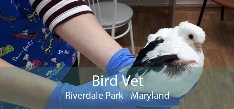 Bird Vet Riverdale Park - Maryland