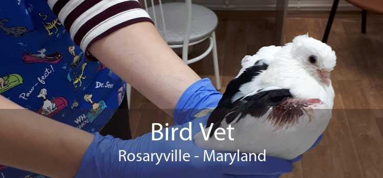 Bird Vet Rosaryville - Maryland