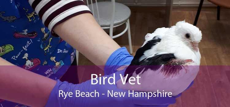 Bird Vet Rye Beach - New Hampshire