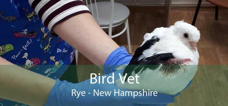 Bird Vet Rye - New Hampshire