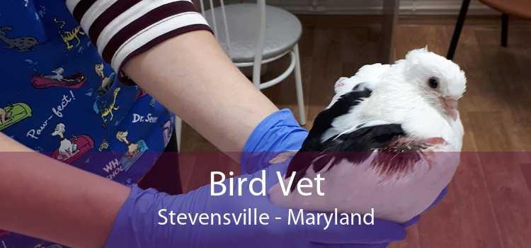 Bird Vet Stevensville - Maryland