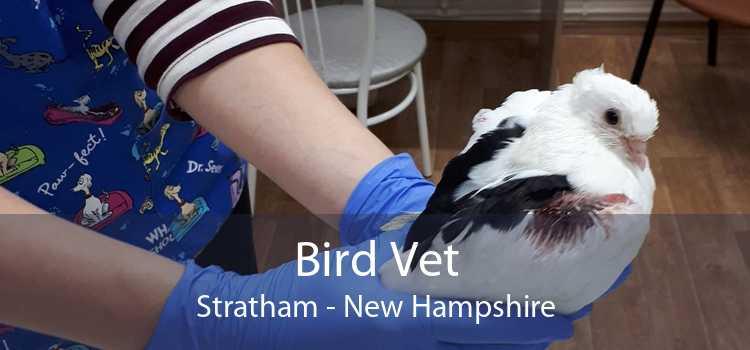 Bird Vet Stratham - New Hampshire