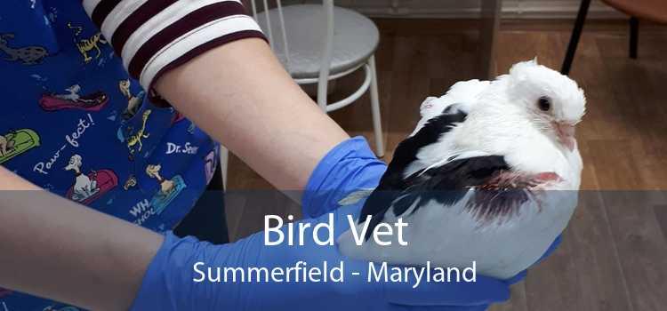 Bird Vet Summerfield - Maryland