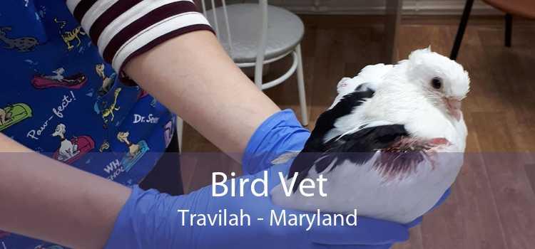 Bird Vet Travilah - Maryland