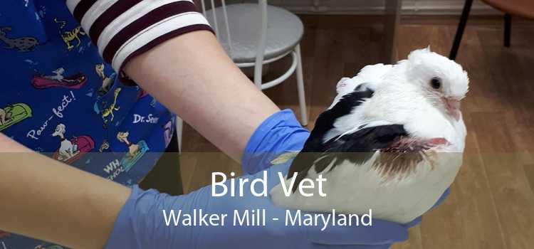 Bird Vet Walker Mill - Maryland