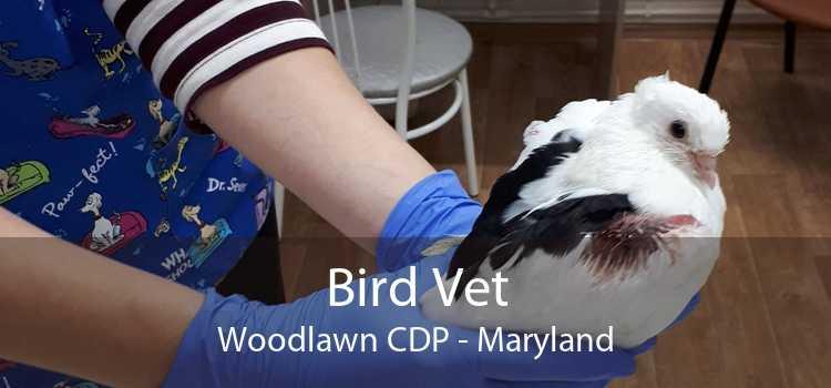 Bird Vet Woodlawn CDP - Maryland