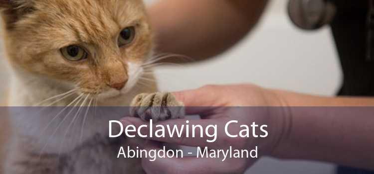 Declawing Cats Abingdon - Maryland