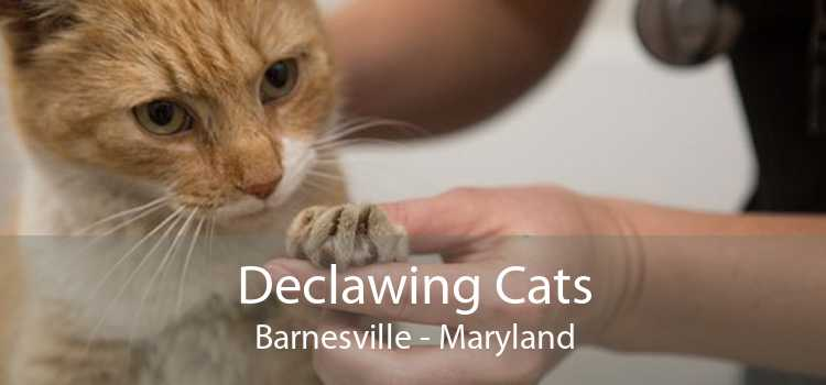 Declawing Cats Barnesville - Maryland