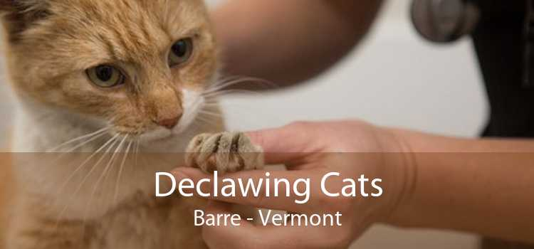 Declawing Cats Barre - Vermont